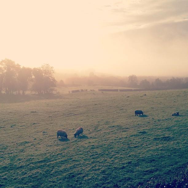 20121020 Morning fog