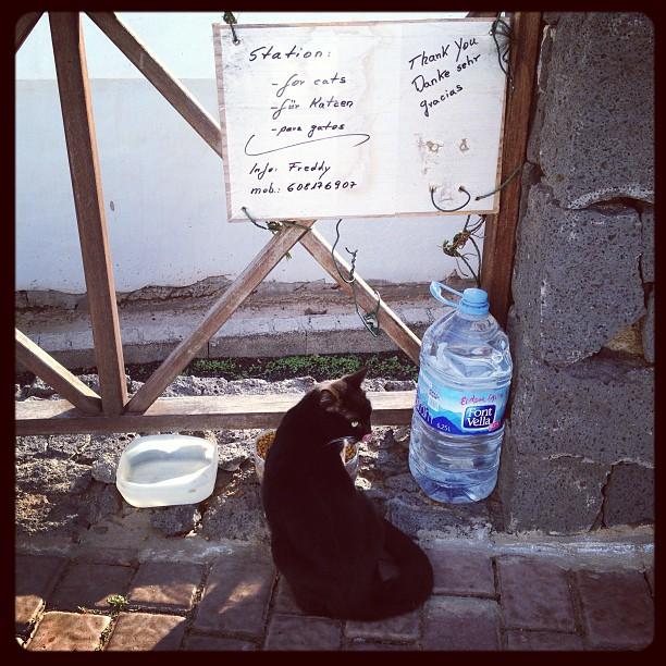 20121214 Cat station
