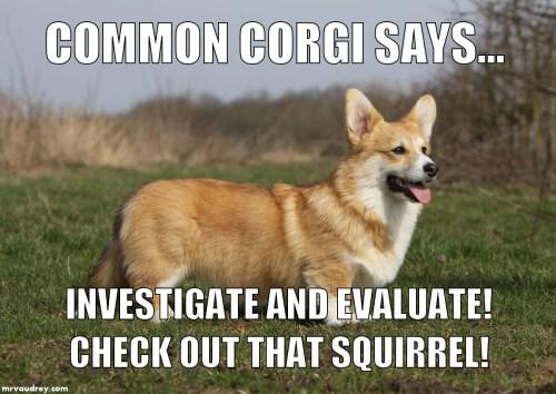 Common Corgi - investigate