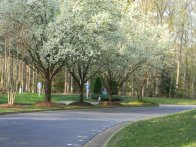 Street Scene in Berkeleys Green Williamsburg