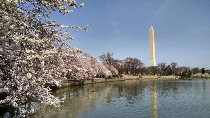 The Washington Monument in the distance beyond a lake with cherry blossoms on the shore