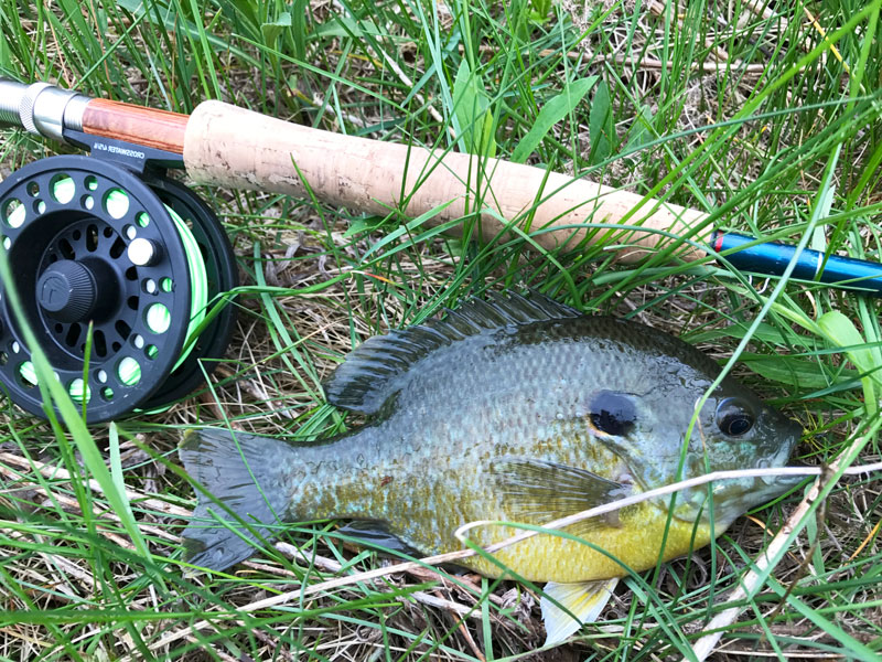 Small lakes across Mississippi offer great fishing for bluegill and other members of the bream family.