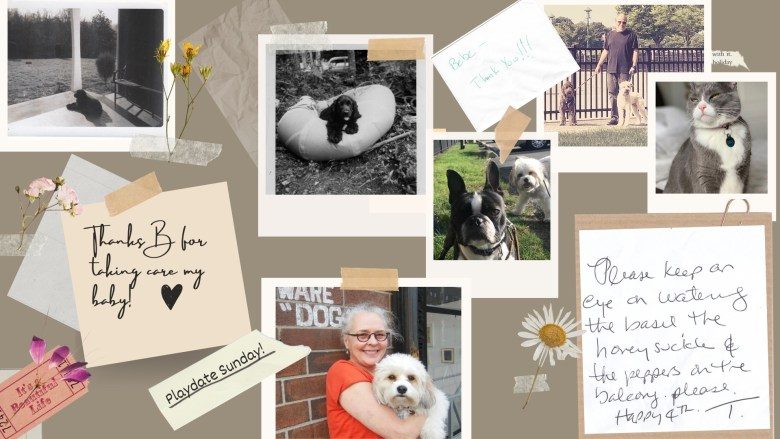 Ms. B's Pet Care -Seaport Dogwalker Banner