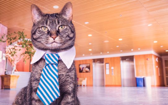 The Time I Hired a Cat to Walk My Dog - The Art of Negotiation