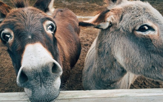 Negotiation Donkeys - Quit Your Crying!