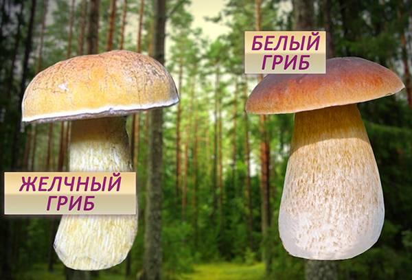 как при готовке проверить грибы