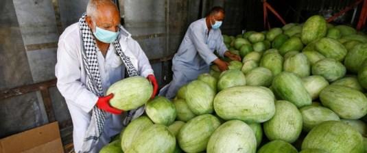 جائحة كورونا تعود موسم خير على المزارعين في العراق