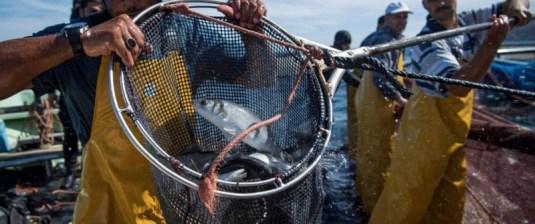 ارتفاع منتجات الصيد البحري يحفز الاقتصاد المغربي