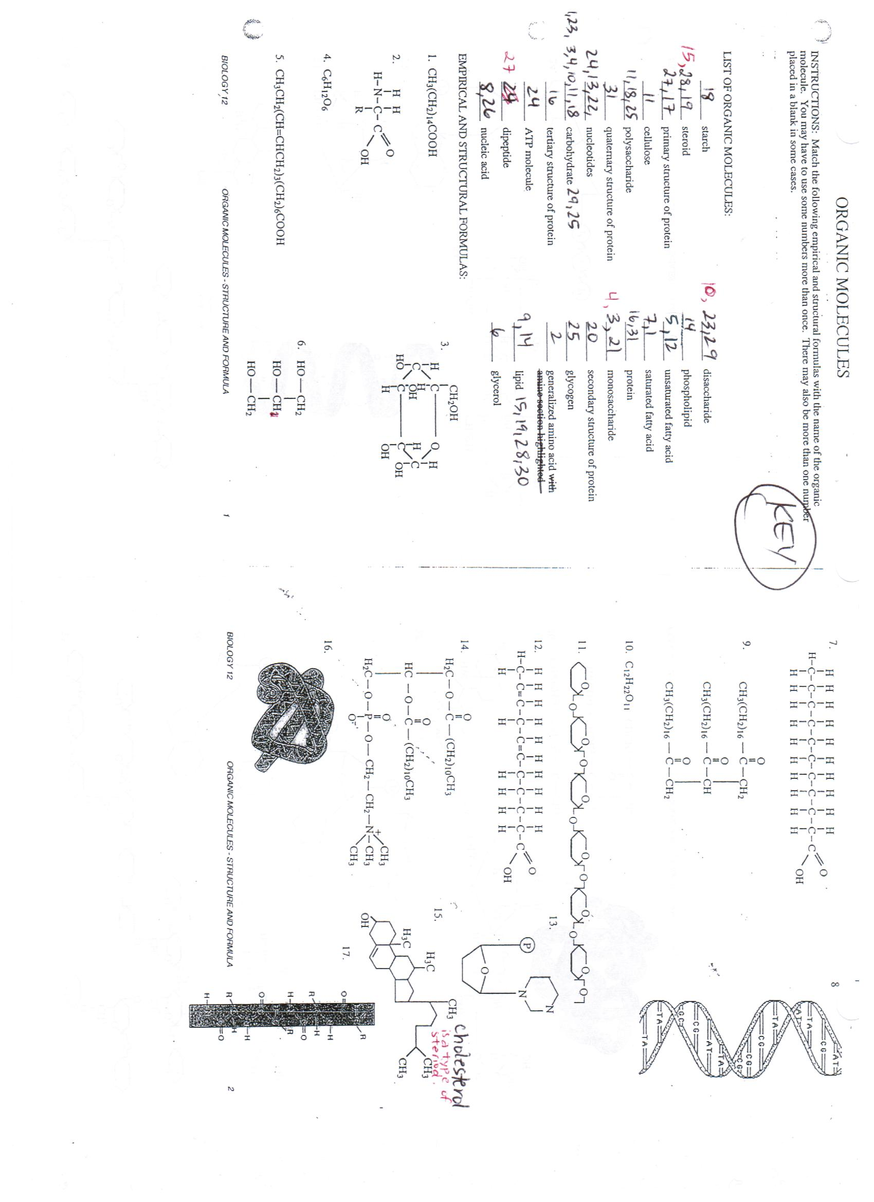 Printables. Holt Biology Worksheet Answers. Mywcct
