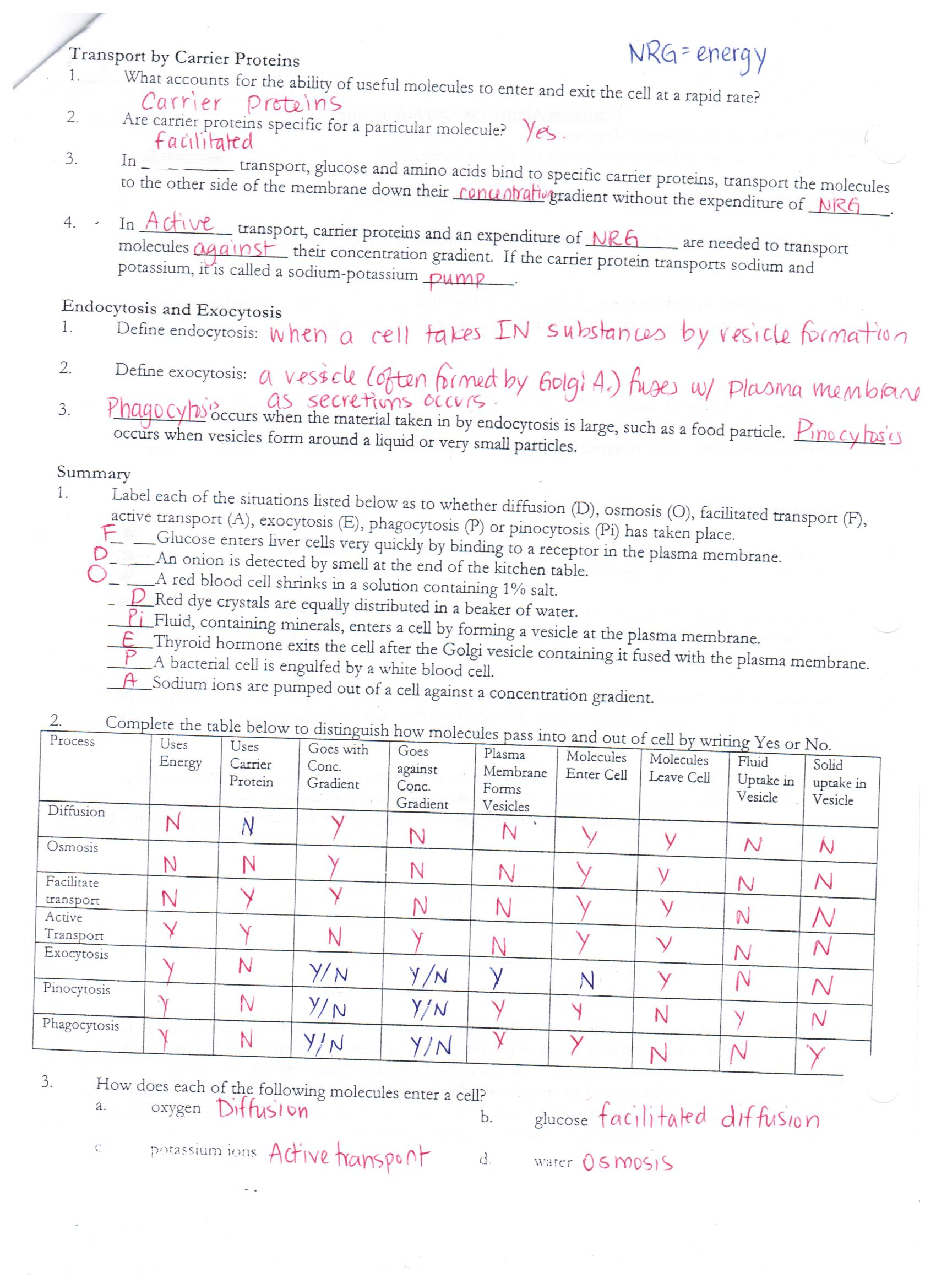Worksheet Cell Transport Worksheet Answers Worksheet Fun