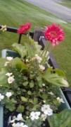 Flowers in my garden