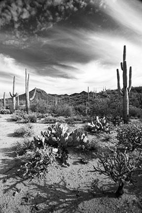 B & W Tucson