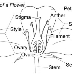 flower dissection links ms hazen 7th grade science water lily diagram peacock diagram [ 1100 x 815 Pixel ]