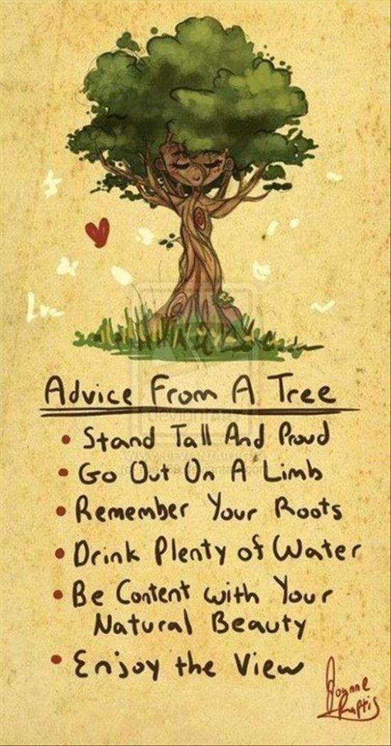 Inspiration Board - Inspirational Quotes. Advice from a Tree