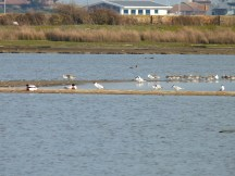 Whilst this isn't a great photo (so much zoom!), there is a real variety of birds - Godwit, Sandwich Tern, Shelduck, Black-headed Gull, and another I can't remember