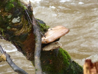 A fungus just above the river
