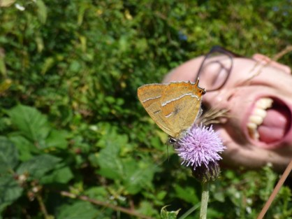 Matt photobombs the Brown Hairstreak butterfly (Thecla betulae)