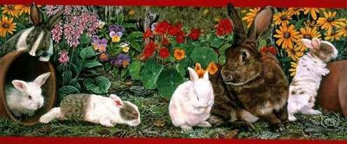 Baby-Bunnies-#1-Of-4