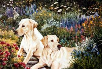 Two-Dogs-In-A-Garden