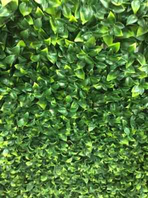 عشب جداري صنف ثاني