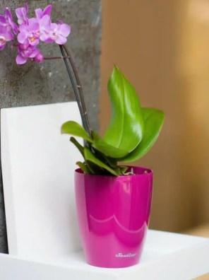 وعاء ذاتي الري ORCHIDEA-TWIN تصميم مبتكر من سانتينو