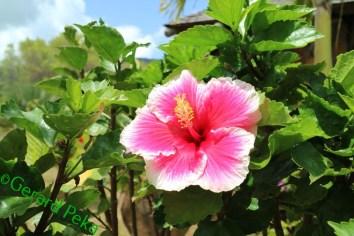 flower2 (1)