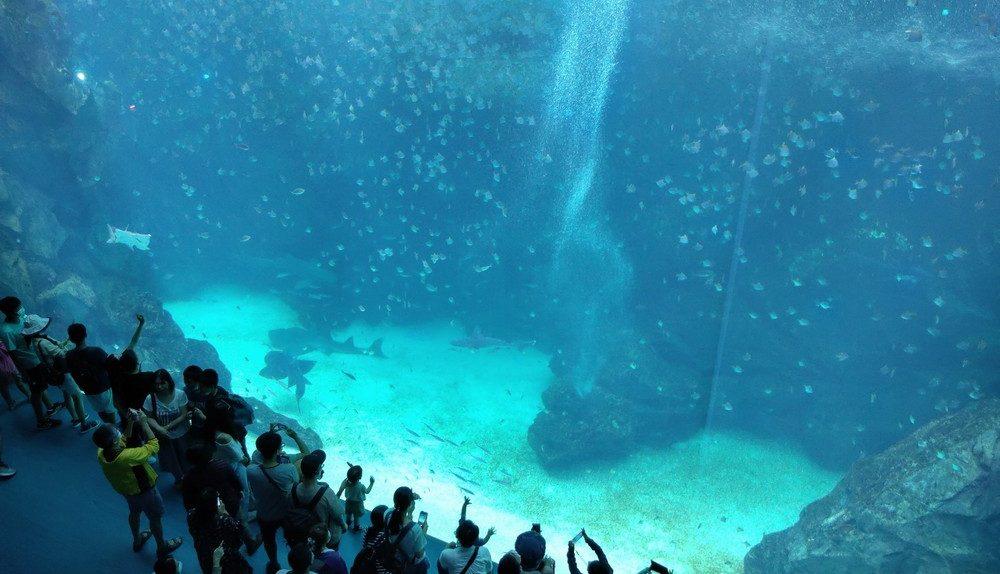 桃園 日本X Park海外首座水族館。週歲開箱&購票&展覽重點攻略 - 島主小姐's 環遊世界