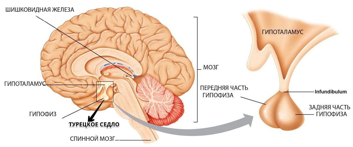 hipofizės adenomos