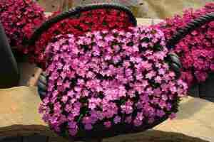 NH-17 花はなライトピンク
