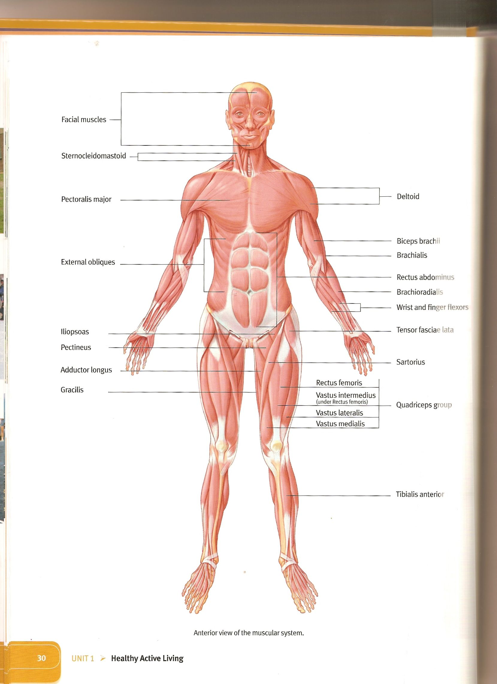 Images About Anatomy