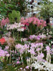 chelsea flower show 2021 pic- Kerstin Rodgers-msmarmitelover - 143