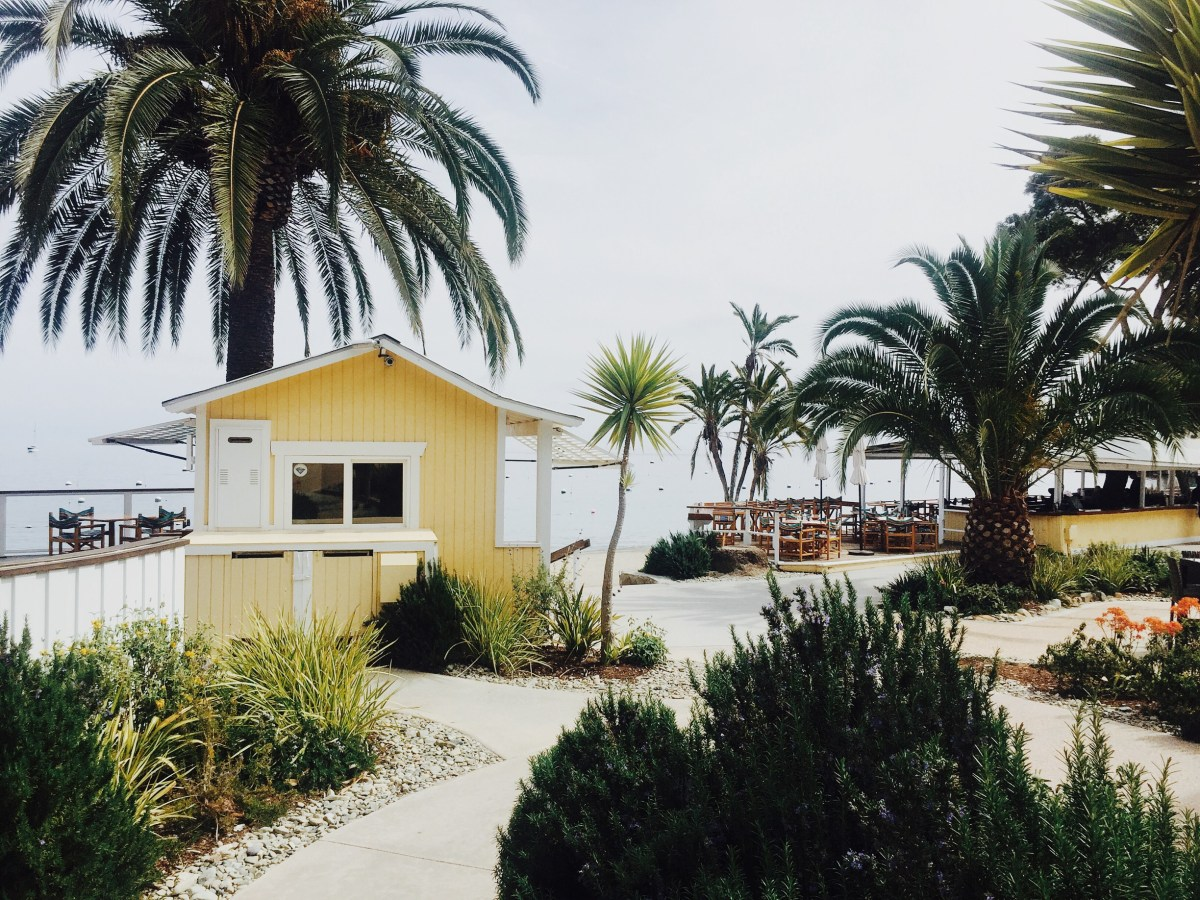 Yellow, Beach, Palms, Resort, Travel, Lifestyle, Explore, Avalon, Catalina Island, Landscape,