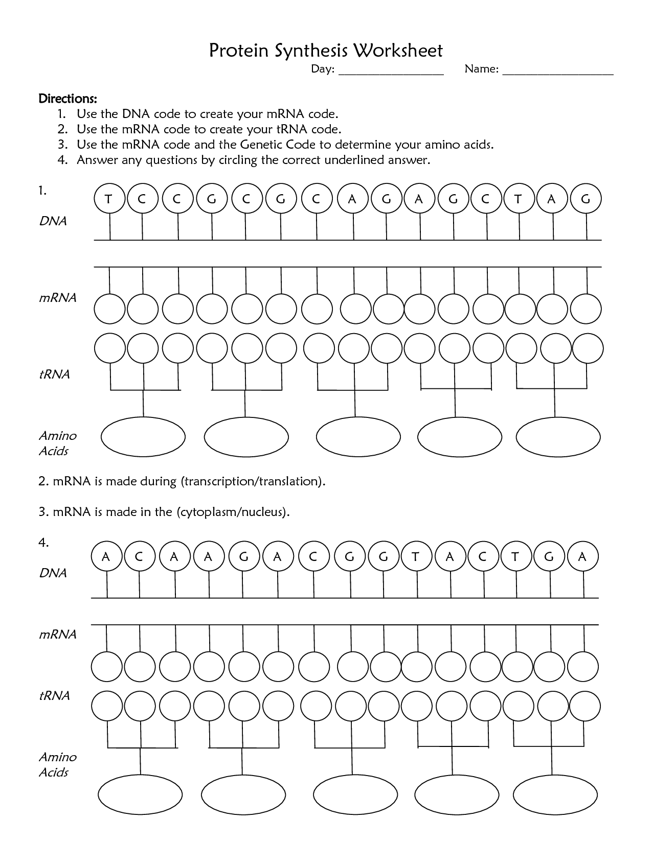 Chapter 10 Dna Rna And Protein Synthesis Worksheet