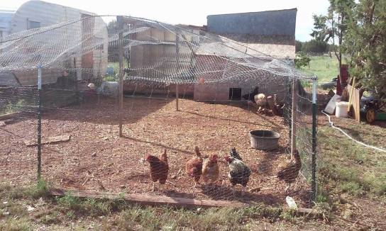 chicken coupe used materials
