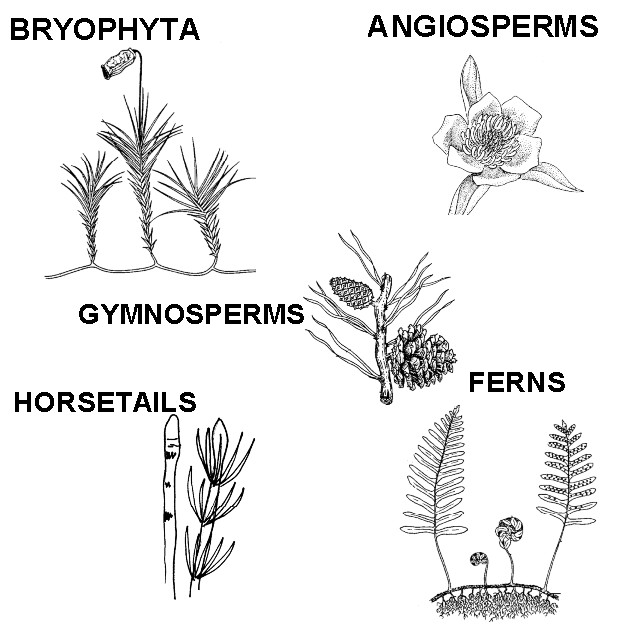 plant_classification