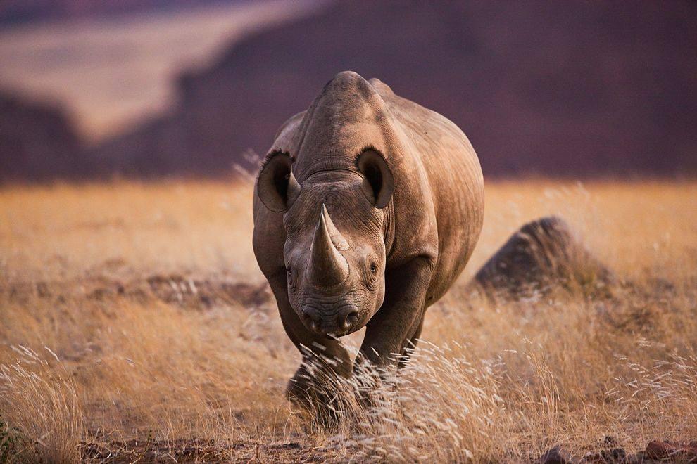 I'm Glad All The Black Rhinos Are Dead
