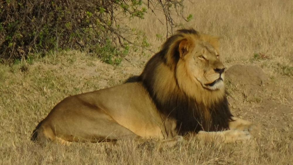 Cecil Can Help - Even In Death (1/2)
