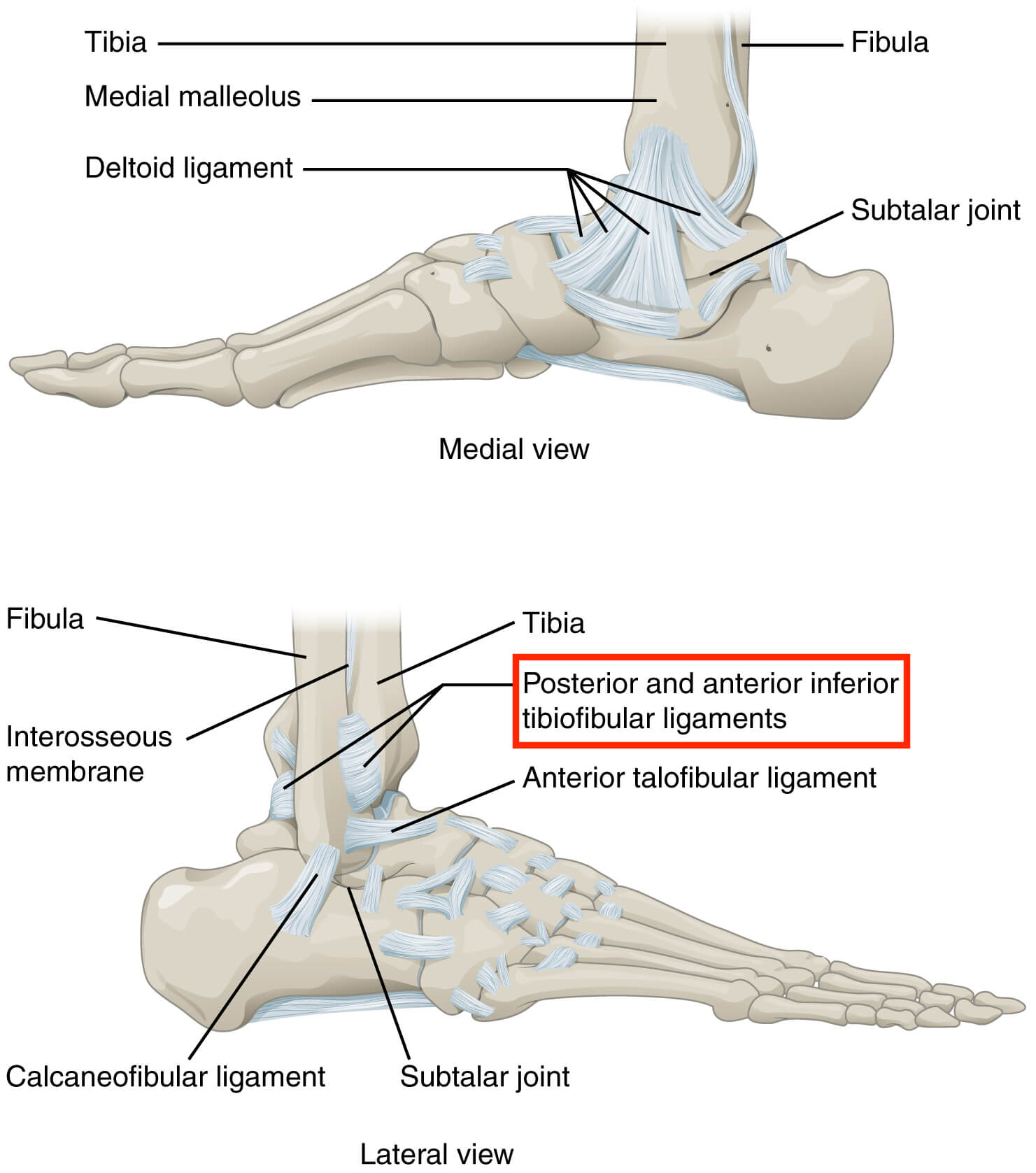 hight resolution of high ankle sprains involve ligaments that attach above the ankle joint hence the name