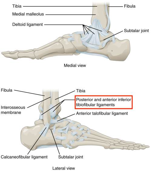 small resolution of high ankle sprains involve ligaments that attach above the ankle joint hence the name