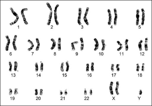 Ch 14 Human Heredity