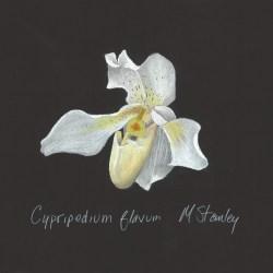 Cypripedium flavum