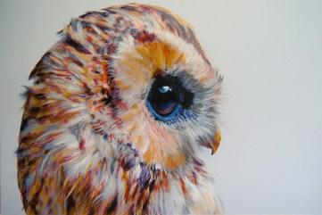 owl-4