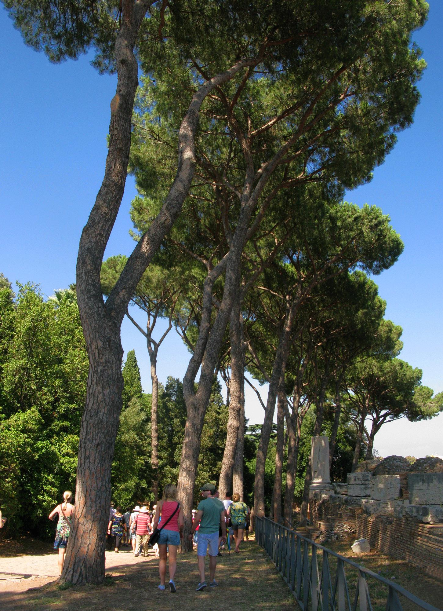 Palatine Hill Stone Pines