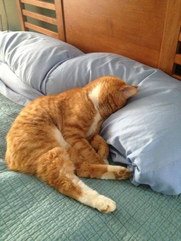 cute cats sleep like this tyle 14