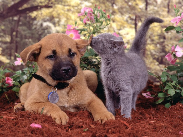puppy-and-kitten-horizontal-cover