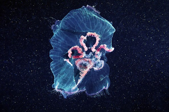 Jellyfish-photography-finle-01