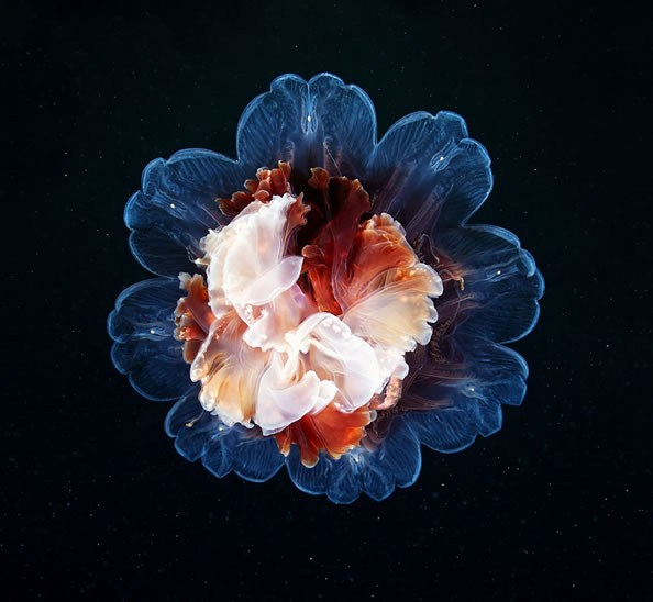 Jellyfish-photography-finle-15
