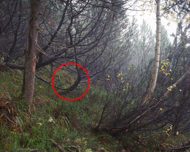 狙擊手隱身出任務  找到眼睛快瞎了還是找不到 18