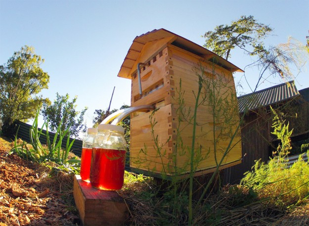 一對父子發現人類採蜂蜜時,不用打擾蜜蜂的完美方法