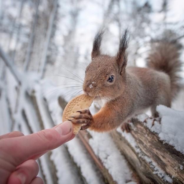 攝影師拍下自己伸手餵食各種動物超萌的畫面